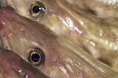 fisk-och-skaldjur-4