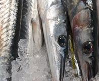fisk-och-skaldjur-5