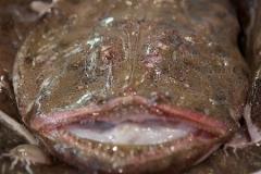 fisk-och-skaldjur-2